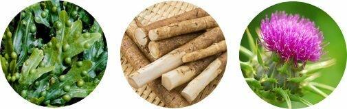 Dextrom est composé d'ingrédients naturels tels que le Fucus Vesiculosus, extrait de barbane et graine de fenouil